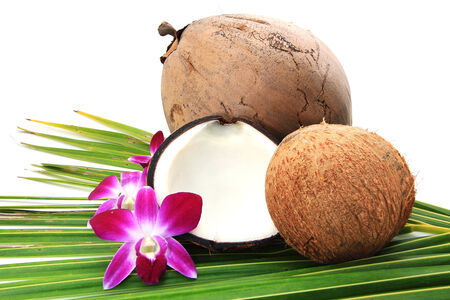 Coconut photo