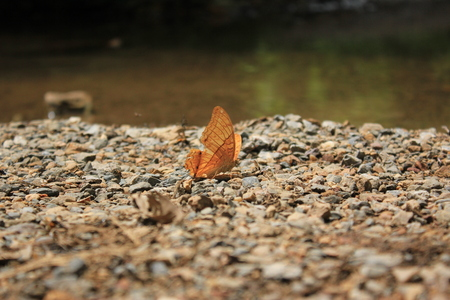 the antennae: Butterfly  an insect with two pairs of large wings that are covered with tiny scales, usually brightly colored, and typically held erect when at rest. Butterflies fly by day, have clubbed or dilated antennae, and usually feed on nectar. Stock Photo
