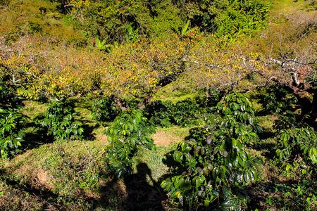fang: Cultivation Peach at Doi Ang Khang Royal Agricultural Station  Located in Fang, Chiang Mai, Mae Ngon Thailand. Stock Photo