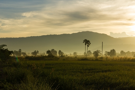 pat: Cornfield atmosphere morning at Nam Pat District,  Uttaradit province ,Thailand Stock Photo
