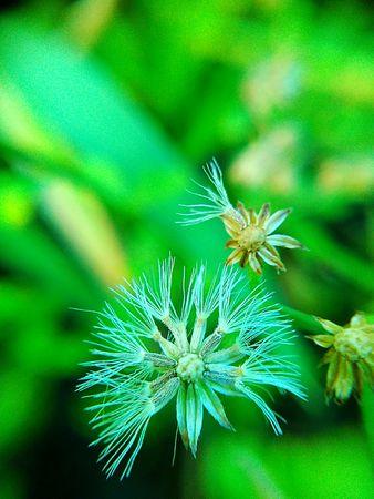 grass close up: Close up Grass flower . Macro photo , Flower background