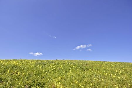 cloudshape: Flowering field and a blue sky Stock Photo