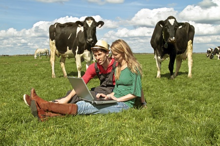 ganado: Pareja joven con la computadora port�til entre las vacas en el campo de los Pa�ses Bajos Foto de archivo