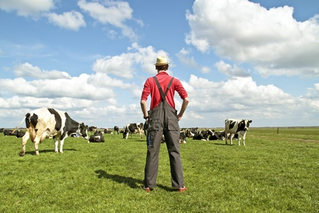 Farmer te kijken naar zijn koeien op het platteland van Nederland Stockfoto