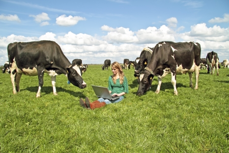 Young beautiful woman with her laptop between the cows