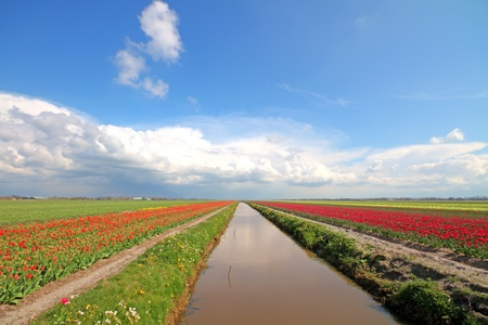 Typical dutch wide view in the countryside from the Netherlands photo
