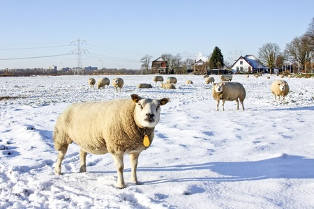 Wintertime in the countryside from the Netherlands Stock Photo - 13930387