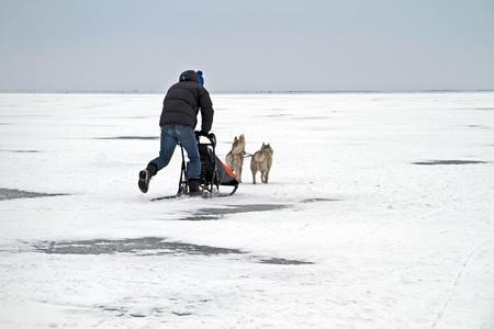 sledging: Slitta sulla IJsselmeer ghiacciato in inverno nei Paesi Bassi