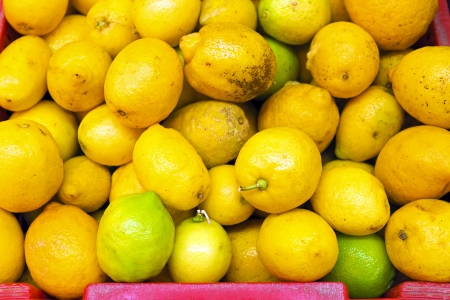 citrons: Organic citrons from Portugal Stock Photo