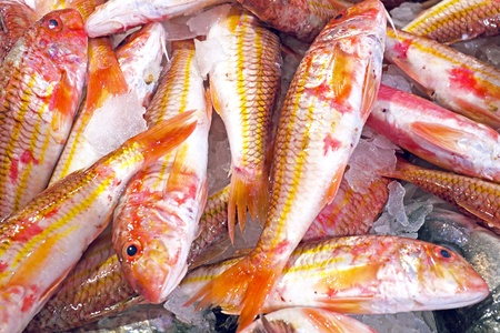 redfish: Black belly rose fish in the fishmarket Stock Photo