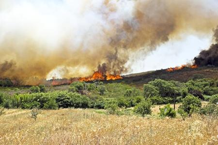 bush fire: Huge bush fire at the westcoast in Portugal