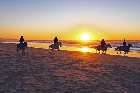 Horse riding on the beach at sunset Standard-Bild