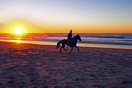 uomo a cavallo: Passeggiate a cavallo sulla spiaggia al tramonto