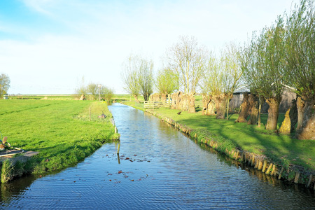 dutch typical: Typical dutch landscape with cropped willows in the countryside from the Netherlands Stock Photo