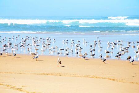 atlantic ocean: Seagulls at the beach near the atlantic ocean Stock Photo