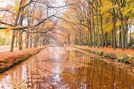 the netherlands: Autumn in the forests in the Netherlands Stock Photo