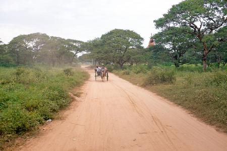 horse cart: Horse cart driving in Bagan Myanmar