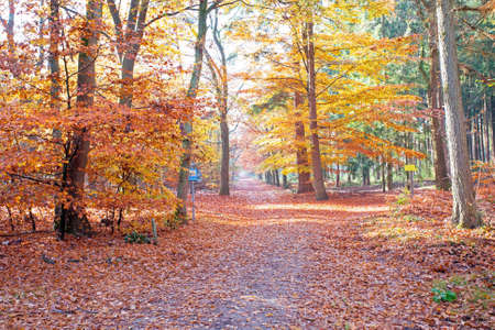 the netherlands: Fall in the forest from the Netherlands Stock Photo