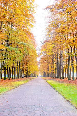 the netherlands: Fall in the countryside from the Netherlands Stock Photo