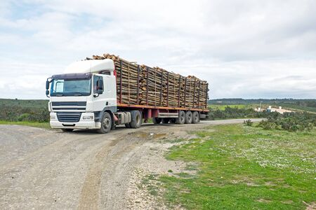 truckload: Truck with load of tree trunks of eucalyptus