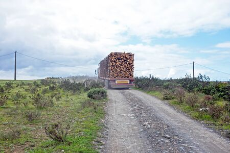 truckload: Trucks with load of tree trunks of eucalyptus Stock Photo