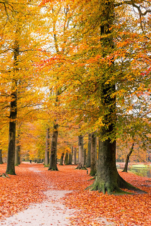 the netherlands: Fall in the forest in the Netherlands
