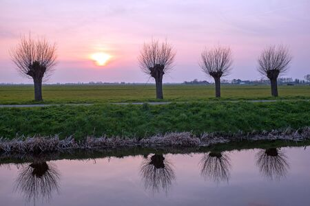 dutch typical: Cropped willows in a typical dutch landscape at sunset in the Netherlands Stock Photo