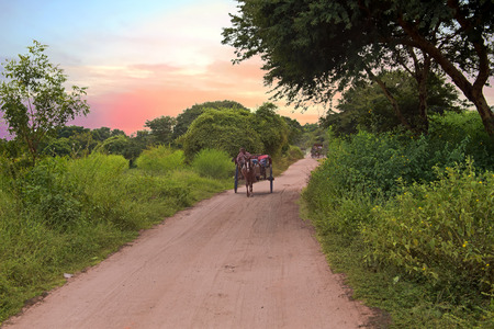 horse cart: Riding horse cart on dusty road in Bagan, Myanmar at sunset