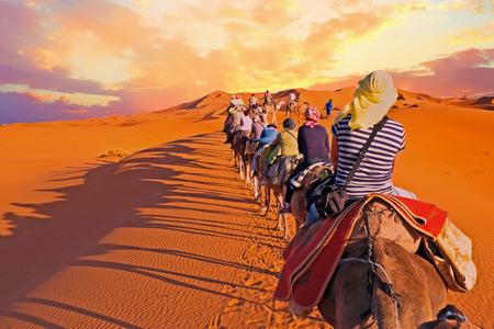 even: Camel caravan going through the sand dunes in the Sahara Desert, Morocco.
