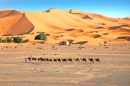Camels in the Erg Shebbi desert in Morocco Stock Photo