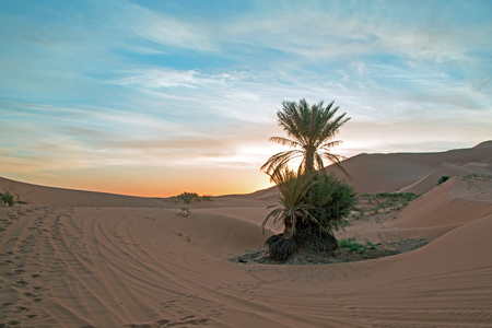 Palmtree in the middle of the Sahara desert in Morocco at sunrise Stock Photo