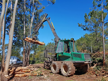 Working in the forest harvesting tree logs