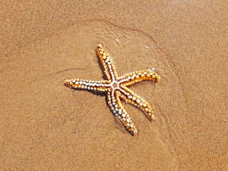 Starfish on the beach at the atlantic ocean 写真素材