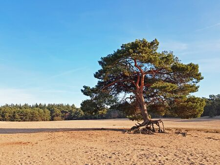 Nature reserve Soesterduinen in the Netherlands on a beautiful summer day