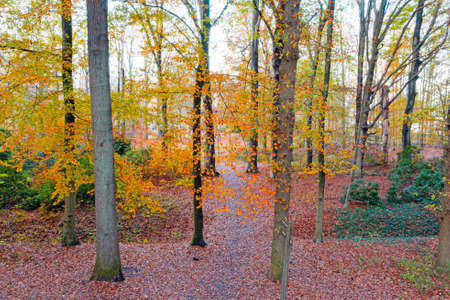 Fall in the forest in the Netherlands