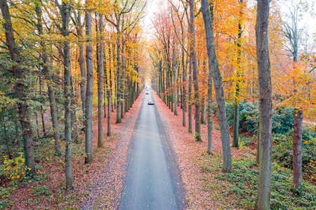 Road in the woods in the Netherlands in fall 免版税图像