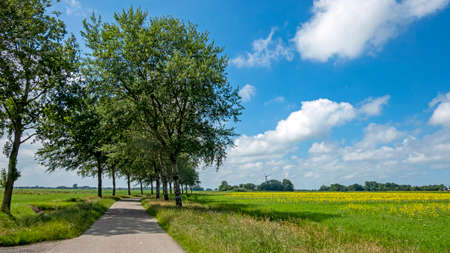 Typical dutch landscape in summer with rapeseed fields in the Netherlands 免版税图像