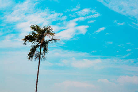 Coconut palm  with Blue sky photo