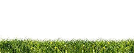 Fresh green grass background isolated on white Stock Photo - 1067820