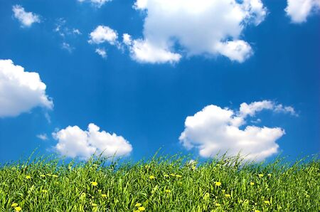 Fresh nature background. Grass with little yellow flowers on bright blue sky Stock Photo - 1067810