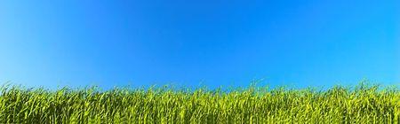 Fresh green grass on bright blue sky background Stock Photo - 1067841
