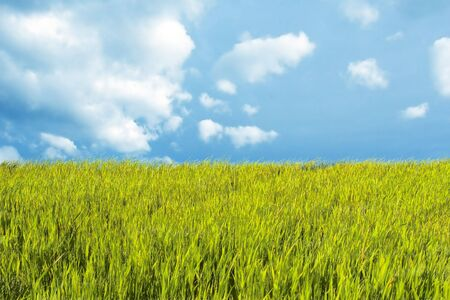 Spring landscape with fresh green grass and bright sky Stock Photo - 1092021