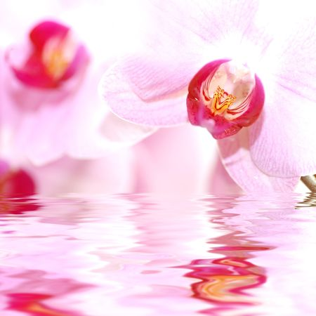 SPA flowers. Orchids in water photo