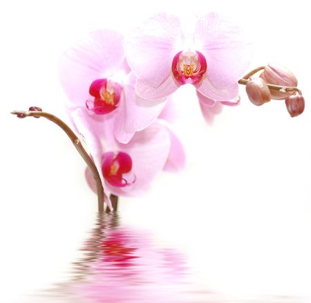 SPA flowers. Orchids in water Stock Photo - 1092032