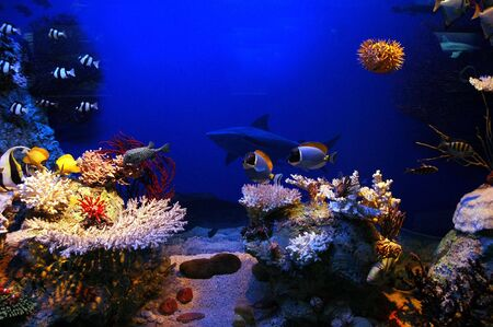 Underwater background - fishes and coral photo