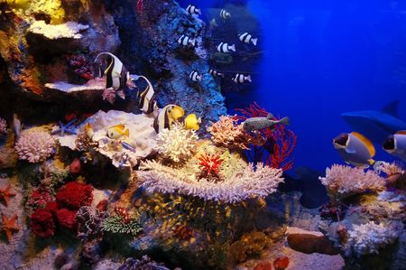 Underwater background - fishes and coral Stock Photo