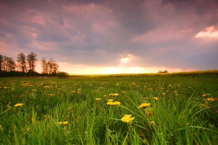Spring sunset scenery. Fresh meadow with dandelions photo