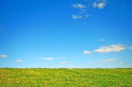 Fresh spring background. Grass with dandelions on bright blue sky Stock Photo - 1105604
