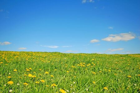 Fresh spring background. Grass with dandelions on bright blue sky Stock Photo - 1105605