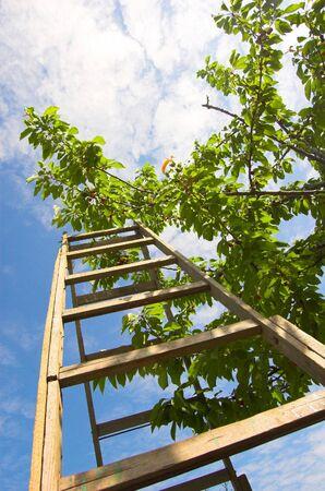 industrious: Garden ladder